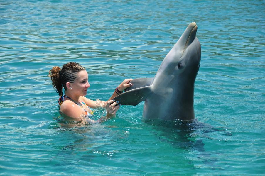dolphin-encounter